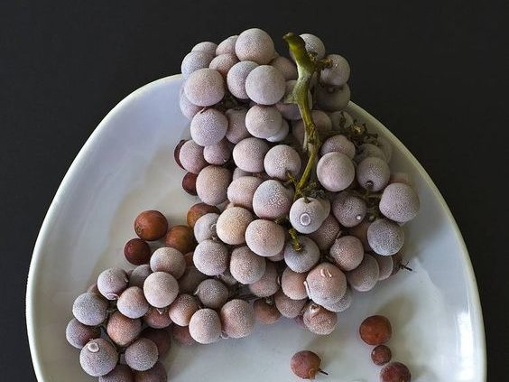 frozen dark grapes on a white platter against a dark background for this food entry. caribu mommy mom mother's blog that gives parenting advice for kids, children, toddlers, preschoolers.